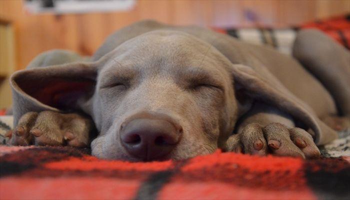 耳栓 睡眠 効果と注意点
