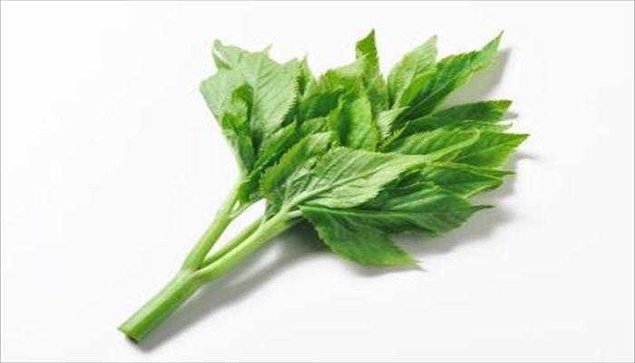 葉野菜 保存 明日葉
