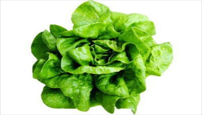 葉野菜 保存 サラダ菜