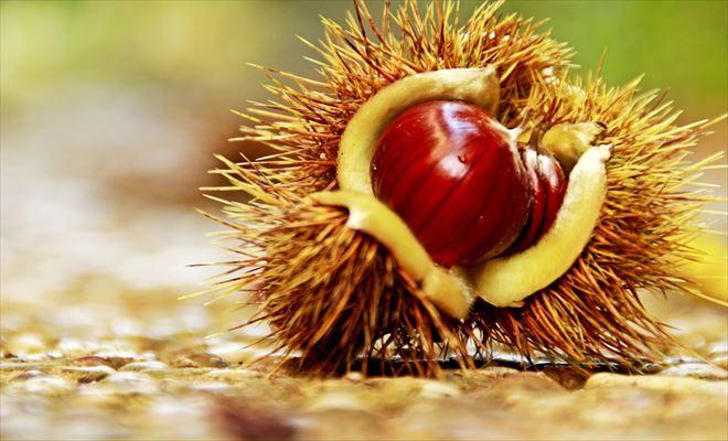 簡単 取る の 方法 渋皮 栗 を に 栗の渋皮の取り方についての質問です。