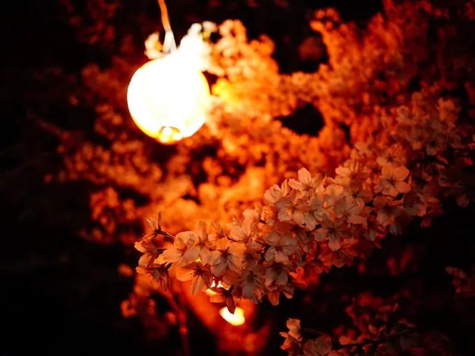 提灯と夜桜