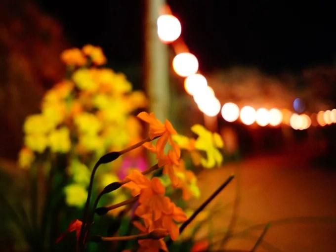 道端の花(夜)