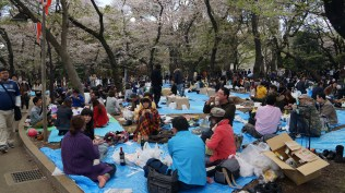 1000s picnicking in the park