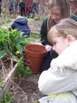 Eco Day May 2013 gardening