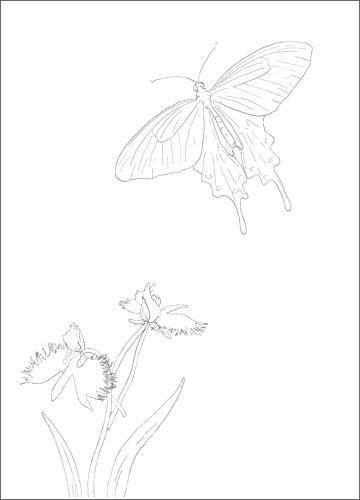 姫路の市蝶ジャコウアゲハと、市花サギソウの塗り絵