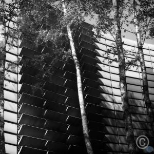 Grasp the wood. Nordic Embassy Berlin