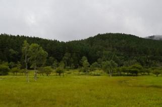 大阿原湿原(17)