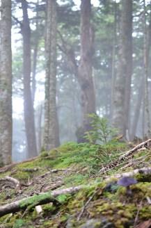 2015/08/24 富士山の林