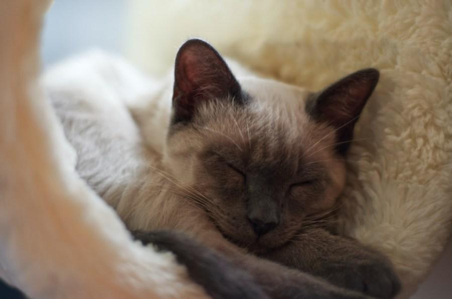 merawat kucing  paska pengebirian