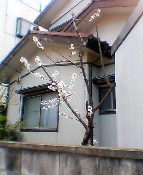 image/kira-ism-2006-03-20T15:49:07-1.jpg