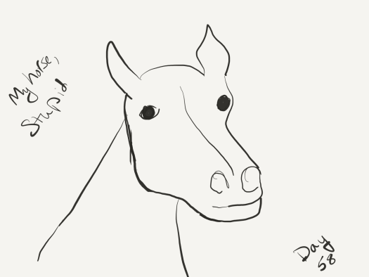 "Bad line drawing of a horse that frankly looks like it's had half its head caved in by a brick. The author needs practice. Labelled ""my horse, Stupid."""