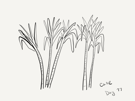 line sketch of five bamboo or sugar-cane like plants, with thick segmented stems and a mess of floppy leaves at the top.