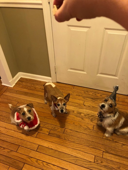 Photo from above, looking down on Kaylee in a red cape that's hanging sideways, Chance in his collar and tie (barely visible) and Myka in her shiny new year's hat looking up hoping for a treat. At the top of the photo my hand holding a treat
