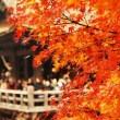 京都の紅葉の時期 見ごろは何月?混雑覚悟で一番美しい紅葉を見に行きたい!