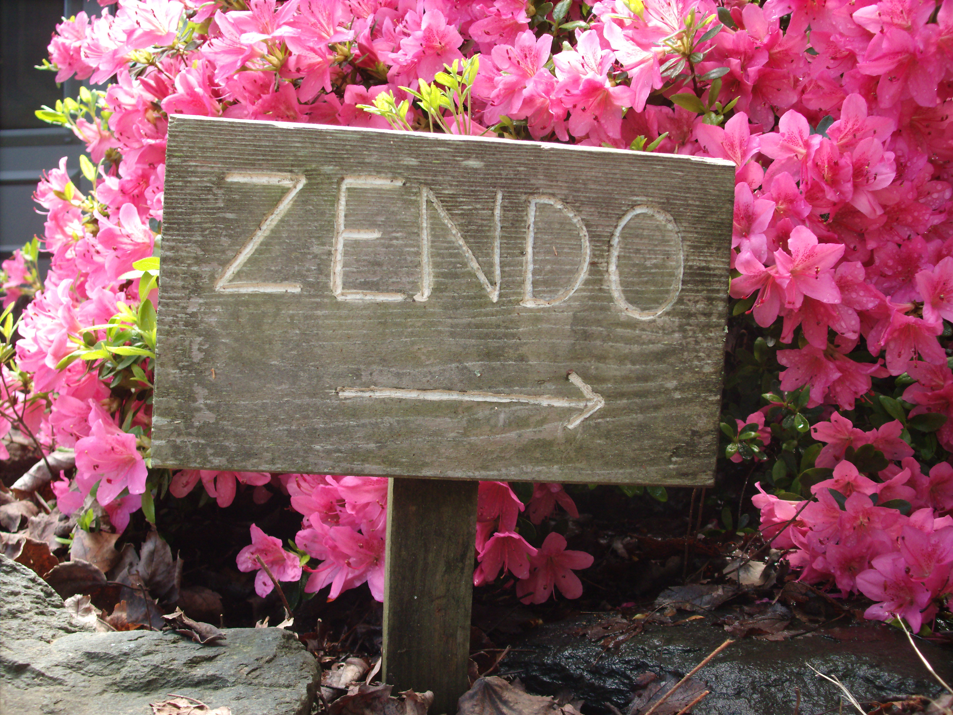 Where is the Zendo (in spring)?
