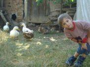 Aral Üç Elma Doğal Tarım Çiftliğinde