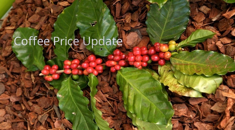 Coffee Prices (Karnataka) on 15-10-2019