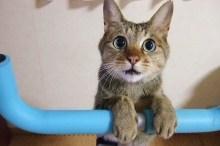 可愛い顔の猫