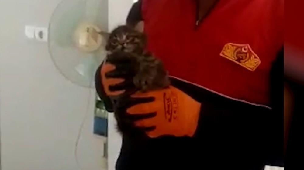 Bacada saatlerce mahsur kalan kedi kurtarıldı