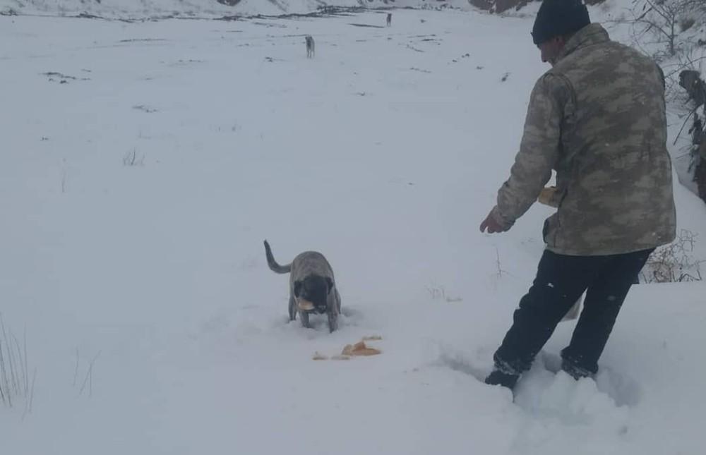 Delice'de soğuklarda sokak hayvanları unutulmadı