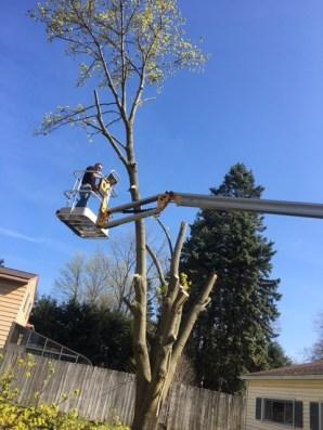 Tree - 7