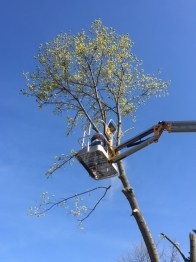 Tree - 8