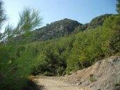 Dağlar, Yeni Çamlık