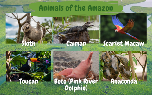 Amazon Animals - KT competition