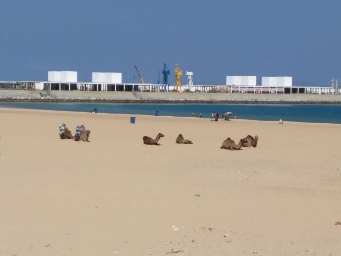 Camels on the Beach in Tangier