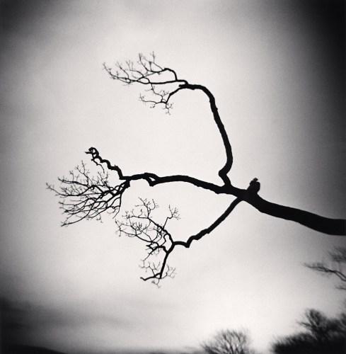 Kenna tree