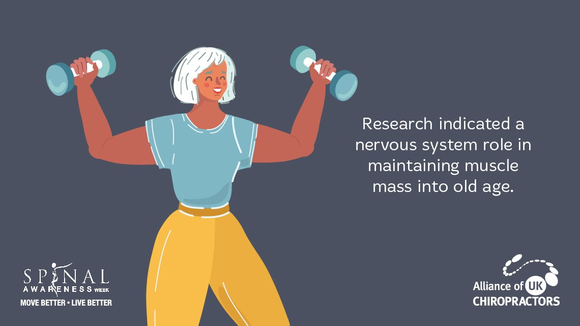 muscle-mass-improved-with-nervous-system