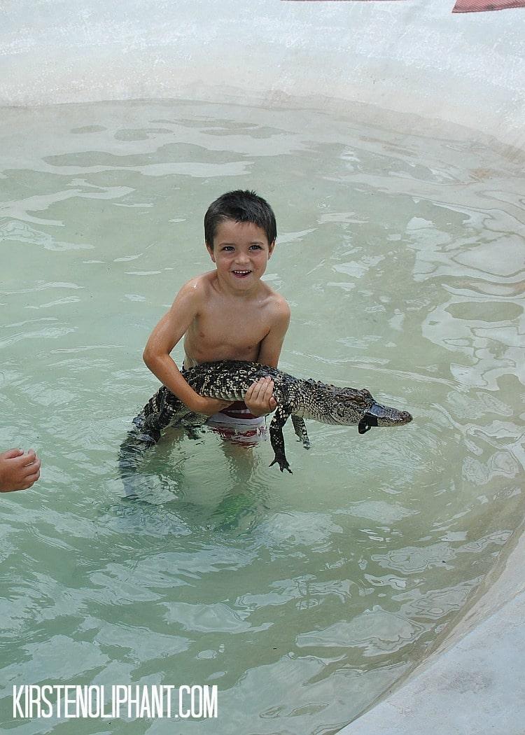 gator country holding gators