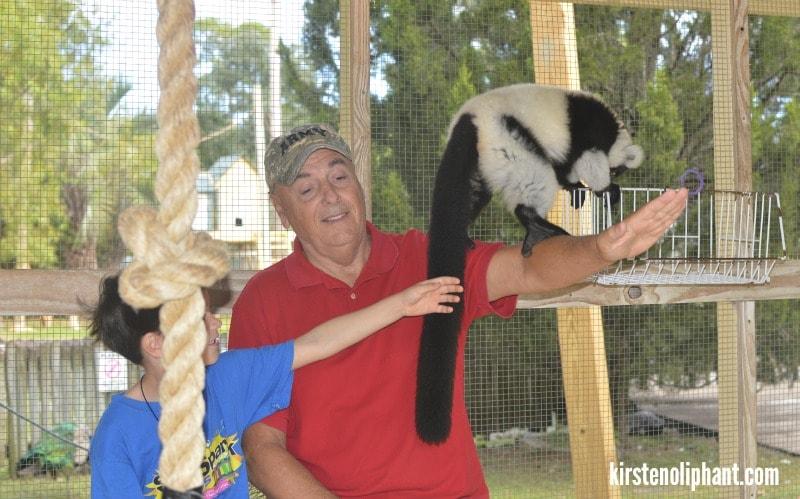 gulf coast zoo lemur