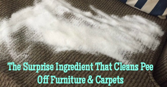 How To Clean Pee Off Furniture And Carpets With Salt