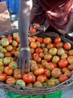 tomater-m-hc3a5nd