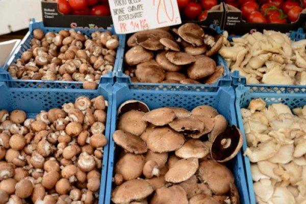 svampe-forskellige