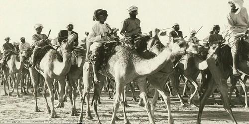 Caravan onta di Dubai. Berlangsung antara tahun 1960an - 1970an.