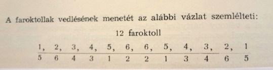 5. sz. kép (forrás: Teremi Gábor: A galamb; Mezőgazdasági Kiadó, Budapest, 1956.)