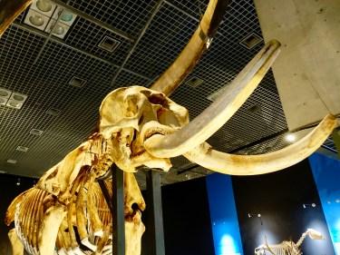 大哺乳類展2に行ってきました!!