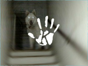 Videóra vették, amint egy elgázolt kutya lelke távozik a testéből