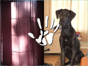 Visszatért gazdájához a kimúlt dán dog szelleme, a nő lefotózta