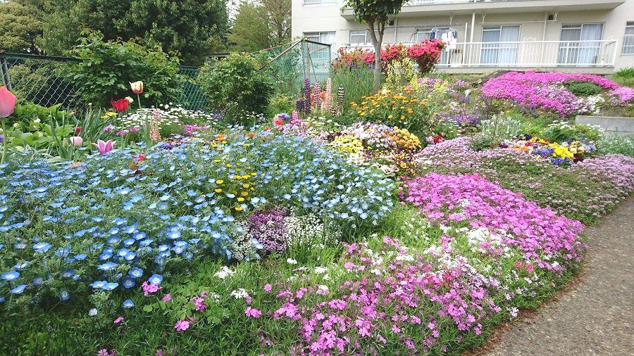 散歩中の花壇