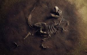 A toddler discovered a dinosaur footprint 200 million years old