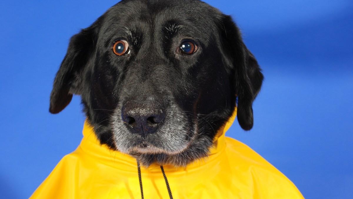 Dog Raincoat Kiss Dog Training
