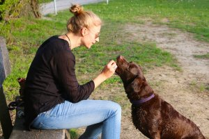 Handfeeding Dog
