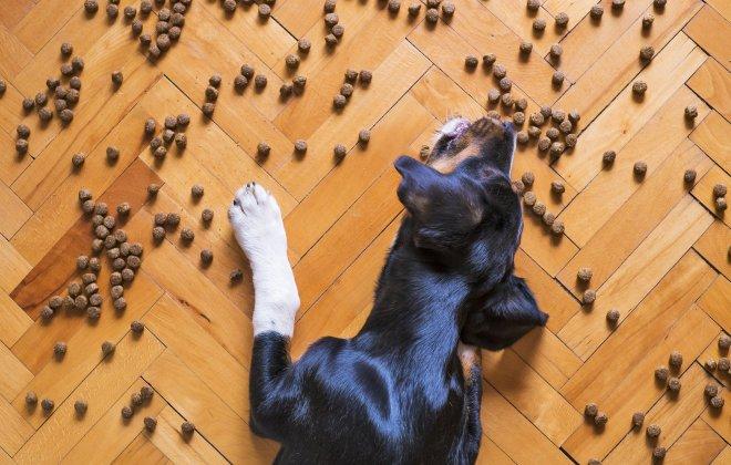 Dog Food Kiss Dog Training