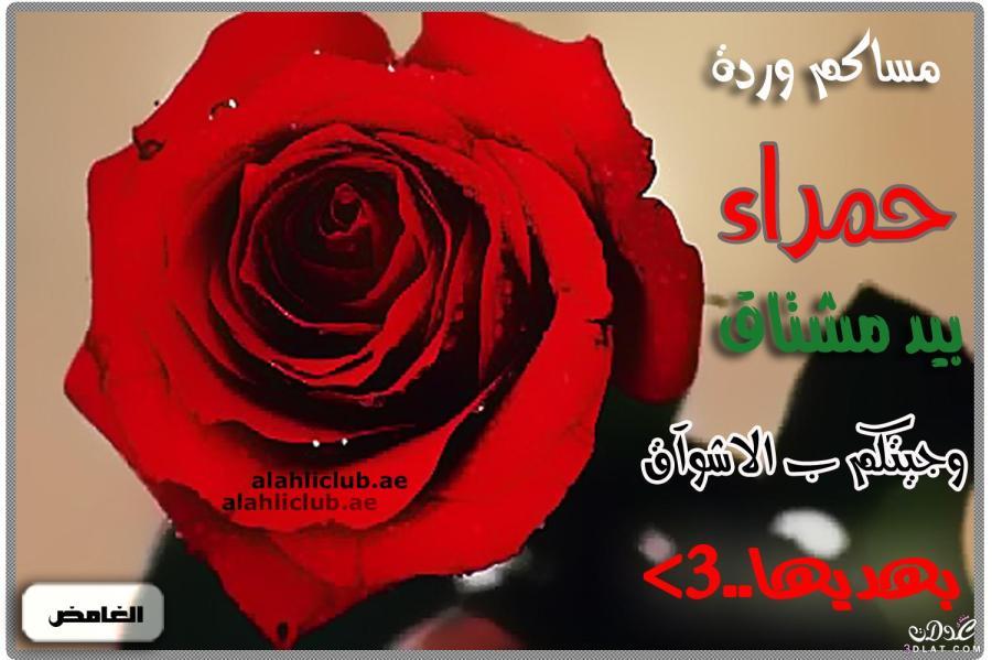 صور مساء الورد صور مكتوب عليها مساء الورود دلع ورد