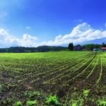 北海道移住のための仕事探し~農業という選択~