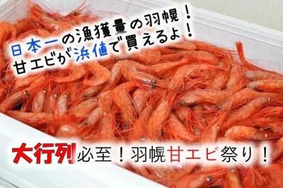羽幌町甘エビ
