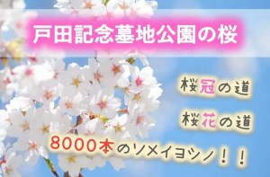 石狩市 桜の名所「戸田記念墓地公園」